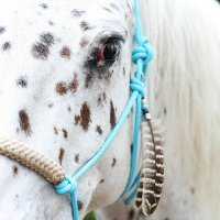 HorseCharmsEU