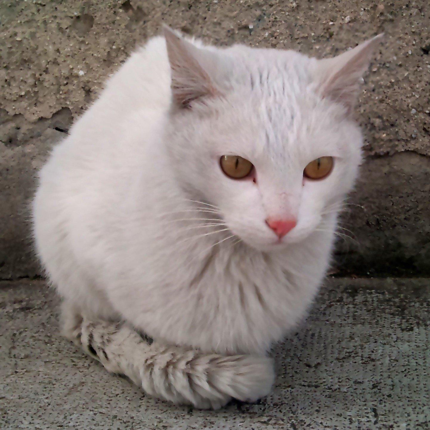 ぐーつー Social Profile