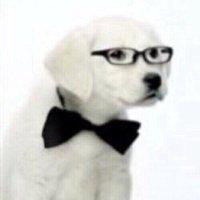 犬 (ギーク) | Social Profile