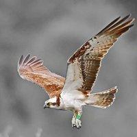 WildlifeVillage   Social Profile