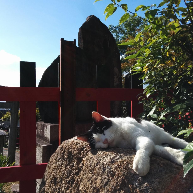 黒鉄ミム Social Profile