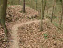 Lesní stezky