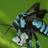 bluebeecharts