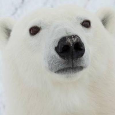 Cool Polar Bear | Social Profile