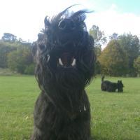 Rebus & Radley  | Social Profile