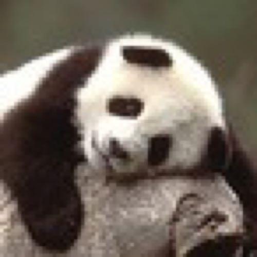 may*秋眠大熊猫 Social Profile