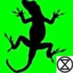 A.Lizard | Social Profile