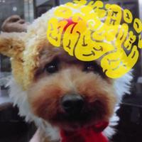 玉子 Lv.34x   Social Profile
