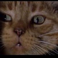 猫猫様のお宅ですか? | Social Profile