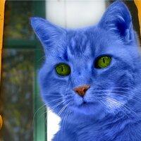 Glow Kitty | Social Profile
