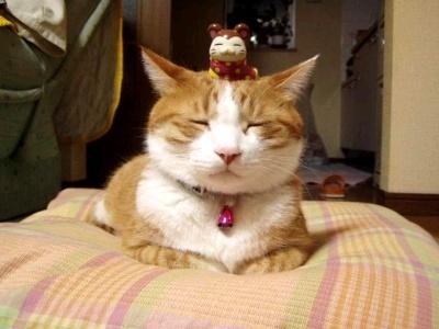 고양이 Social Profile
