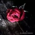 ام شهد | Social Profile