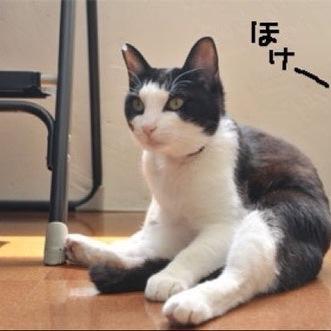 ゆかちん♪ Social Profile