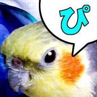 東京ぴぃ | Social Profile