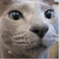 iぬこ 9.2   Social Profile