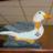 The profile image of Speurmeeuw