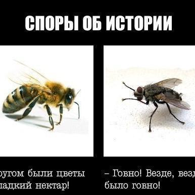 Злой Дарга (@DargaDarga33)