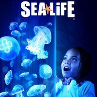 SEA LIFE Aquarium | Social Profile