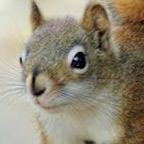 MadCitySquirrel Social Profile