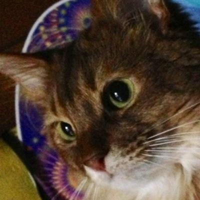 猫好き柔道整復師 | Social Profile