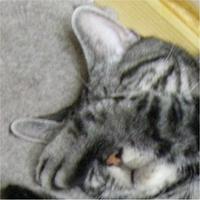 まげんろう@おいちゃん | Social Profile