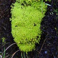 Plant ID Quiz | Social Profile