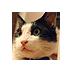 Takashi Shitamichi's Twitter Profile Picture