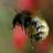 @bumblebee_fr