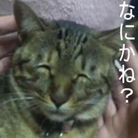 猫神様@リンちゃん専属メイド長 | Social Profile
