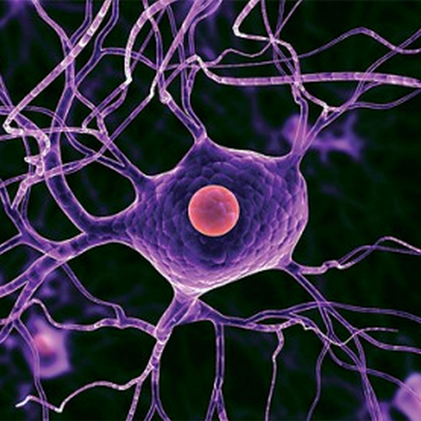 Нервные клетки восстанавливаются секс 12 фотография