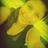 Angii_Borrego