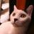 The profile image of kuhkatzen