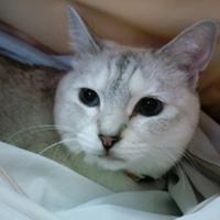 Nana Shao | Social Profile