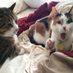Mew, Leia & The Baby's Twitter Profile Picture