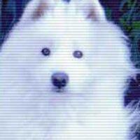 Hazuki@即興の人 | Social Profile