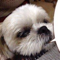 overwatchWatAko#1505 | Social Profile