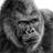 The profile image of gorigori_m