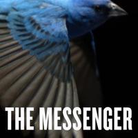 The Messenger | Social Profile