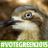 the green birder