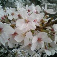 Yasuhide Watanabe | Social Profile