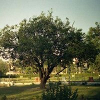 DAHSRA | Social Profile