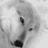 silverwolfcc profile