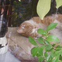 ねむり猫 | Social Profile