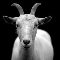 GoatUserStories