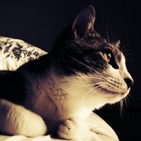 punico | Social Profile