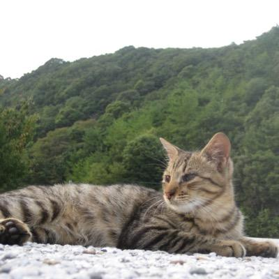 MasafumiSu | Social Profile