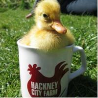 Hackney City Farm | Social Profile
