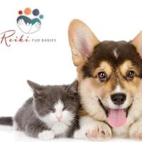 Reiki Fur Babies | Social Profile