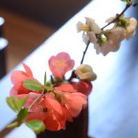 ねの湯 対山荘 修善寺温泉 宿の人より | Social Profile