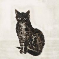 たずぬ (1984- ) | Social Profile